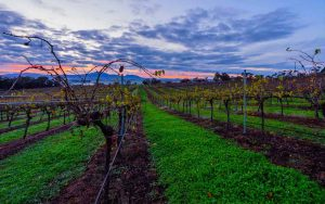 Wine Down Friday at Montara Wines @ Montara Wines | Ararat | Victoria | Australia