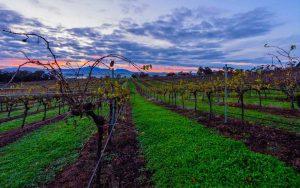 Wine Down Friday at Montara Wines @ Montara Wines | Ararat | Victoria | Australia